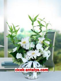 akvaryumda-sans-bambusu-gerbera-212x282 İşyeri İçin Çiçek