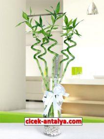 napoli-vazoda-sans-bambulari-212x282 İşyeri İçin Çiçek