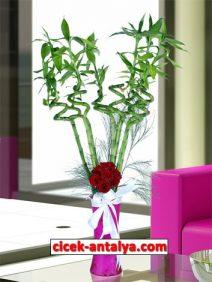 pembe-vazoda-sans-bambusu-guller-212x282 İşyeri İçin Çiçek